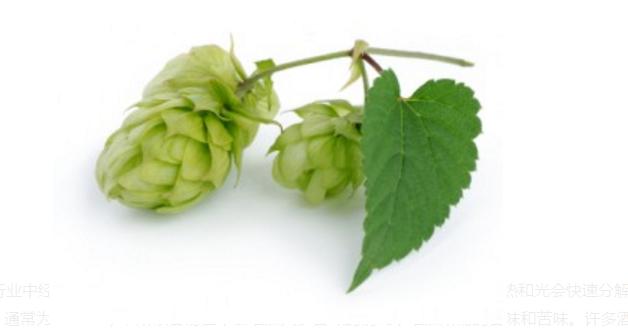 精酿啤酒原料:贵族酒花