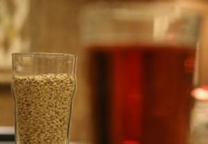 啤酒酿造中的焦糖麦芽和水晶麦芽