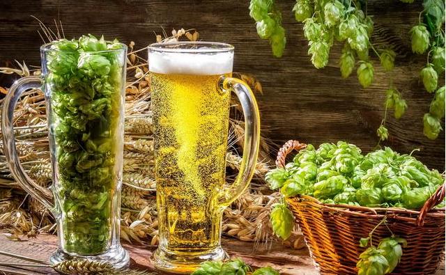 麦汁如何变成啤酒?揭秘麦芽从碾碎、糖化到冷却的过程