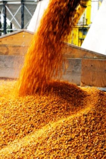 精酿啤酒工艺:谷物酿造_低初始比重的修正