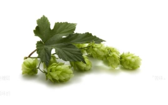 精酿啤酒工艺:酒花投放方式
