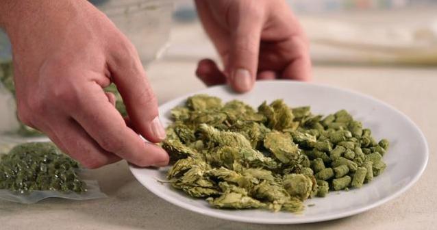 啤酒花的分类:既取决于品种特性,亦取决于使用方式